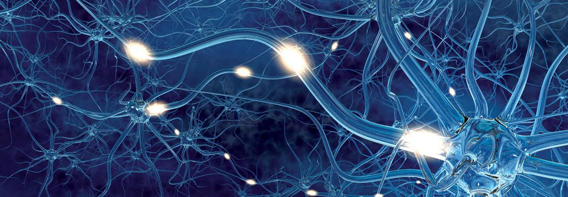 Etudes référencées de l'IRME sur les blessures du cerveau et les blessures de la col